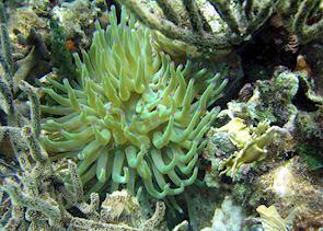 Underwaterworld, Bocas del Toro