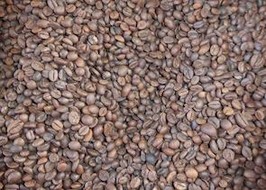 Coffee beans at a local coffee farm, Munduk