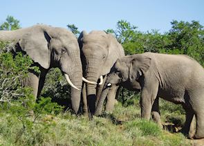 Elephants in the Addo Elephant Park