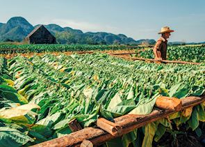 Tobacco fields in Vinales, Cuba