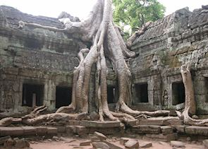Ta Prohm temple being reclaimed by the jungle, Siem Reap