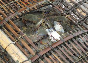 Crab basket, Kep Seafood market, Kep