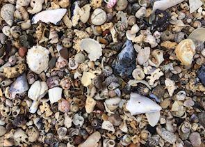 Shells, Saint-Malo