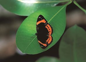 Taveuni rainforests, Fiji