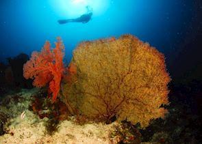 Diving around Komodo, Indonesia