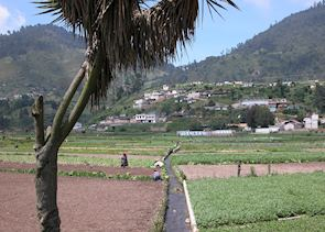 Fertile Highlands, near Quetzaltenango