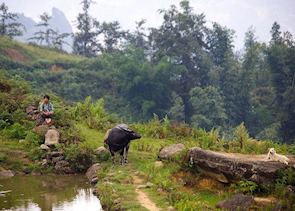 Child, buffalo, and dog on a hill in Sapa, Vietnam, Southeast Asia