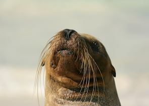 Sea-Lion, Galapagos Islands