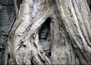 Hidden Bhudda image - Ta Prohm