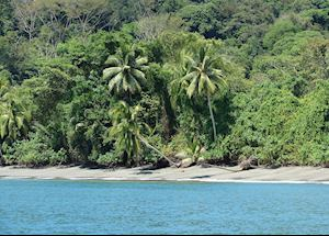 Beach at Nicuesa Rainforest Lodge, Costa Rica