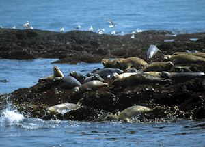 Sea lions in Fundy National Park