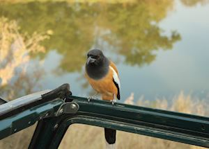 Bird watching in Ranthambhore National Park