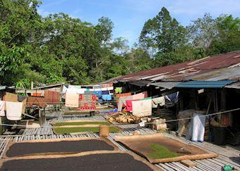 Iban Longhouse, Lemanak River, Sarawak
