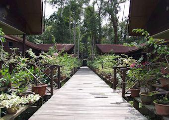 Abai Jungle Lodge, Kinabatangan River