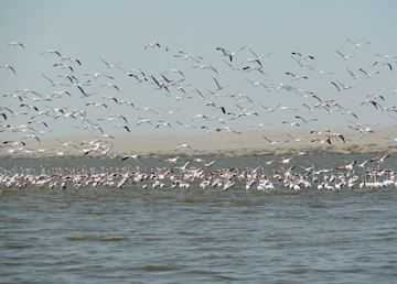 Flamingos near Sandwich Harbour