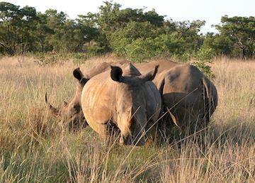 Rhino, Waterberg