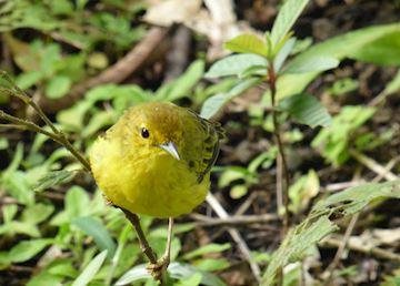 Birdlife in the Mindo cloudforest