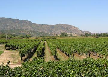The Chilean Wine Region
