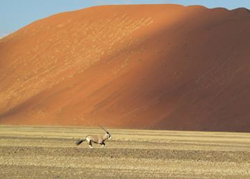 Oryx in Sossusvlei