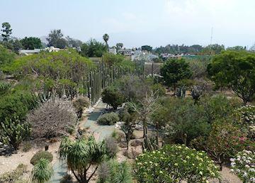 Cactus garden, Santo Domingo Church, Oaxaca