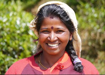 Tamil Tea Picker, Pedro tea plantation, Near Nuwara Eliya