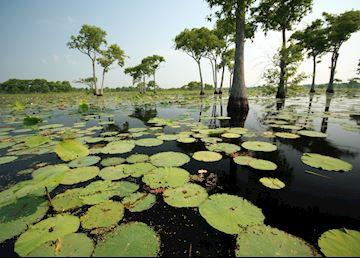 Louisiana Swamplands