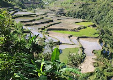 Rice terraces near Hapao, Ifugao Province, Luzon