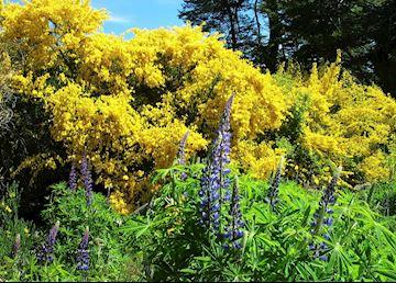 Flora near Bariloche, Argentina