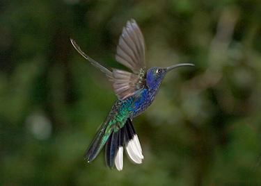 Birdwatching in Central America | Audley Travel