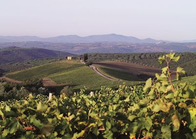 Capanna vineyards, Rosewood Castiglion del Bosco, Montalcino