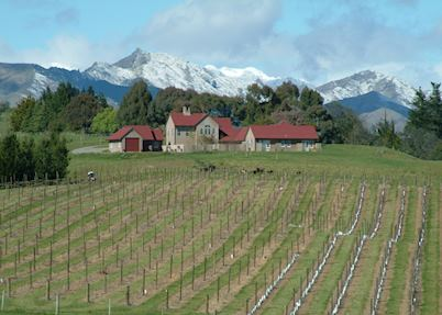 The Bell Tower and its vineyards, Blenheim & The Winelands