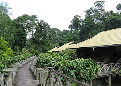 Walkway to chalets, Borneo Rainforest Lodge, Danum Valley