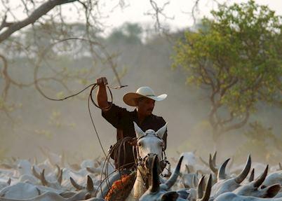 Cowboy at Fazenda Barranco Alto