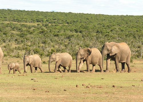 Gorah Elephant Camp, Eastern Cape Game Areas
