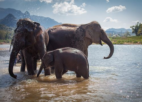 Elephants bathing at Mandalao in Luang Prabang, Laos