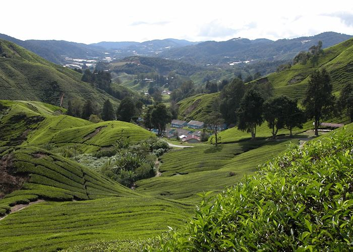 essay about trip to cameron highlands These are three essays i copied from other websites for your reference an educational trip to cameron highlands on 21 june 2010, the geographical society of our school made an educational trip to cameron highlands thirty students/ members of.