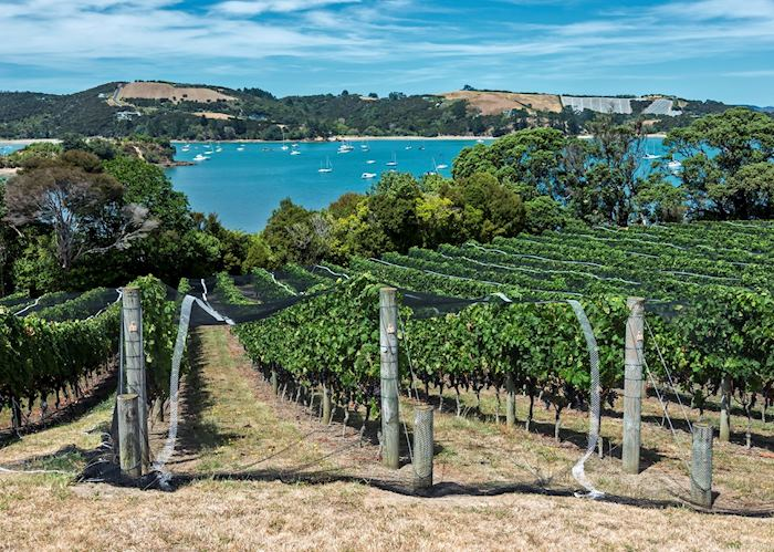 Vineyard on Waiheke Island