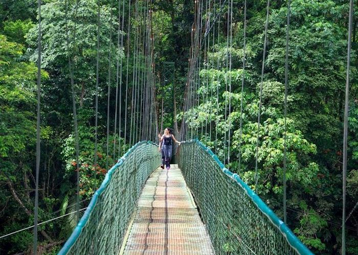 Suspension Bridge at Selva Verde