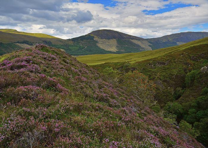Heather Hills, Isle of Skye