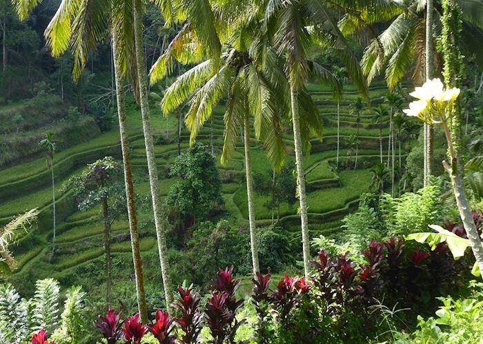 Rice terraces outside of Ubud