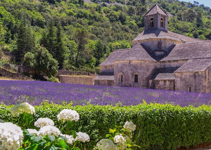 Lavender fields at Abbaye de Sénanque, Provence