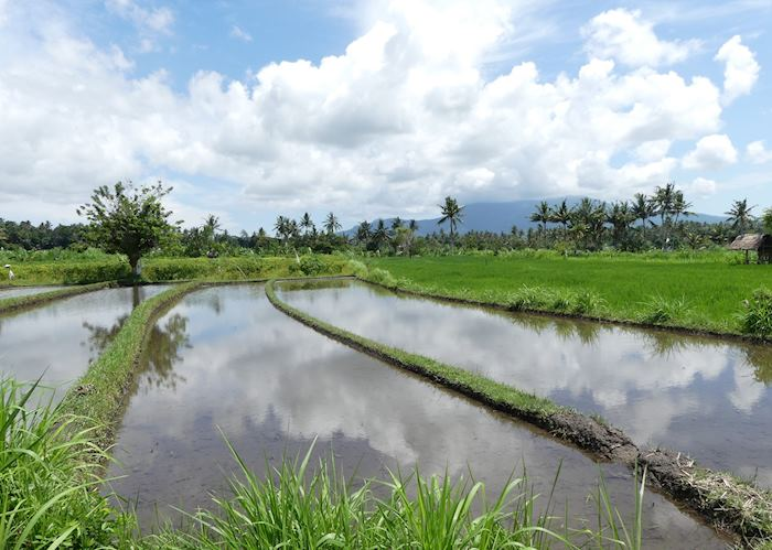 Rice paddy view on the mountain to beach cycling tour, Candidasa