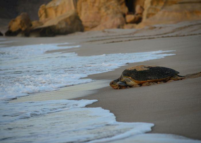 Ras Al Jinz Turtle Reserve