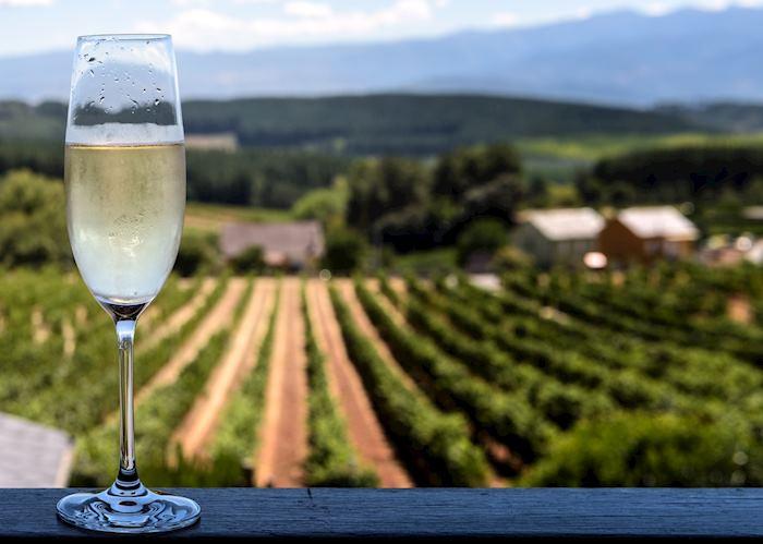 Cava vineyards, Penedès