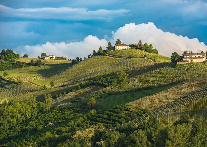 Vineyards in the Langhe, Piedmont