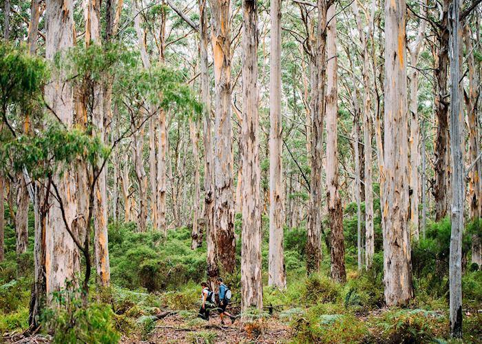 The Margaret River region, Western Australia