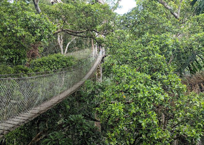 Canopy walk at Reserva Amazonica