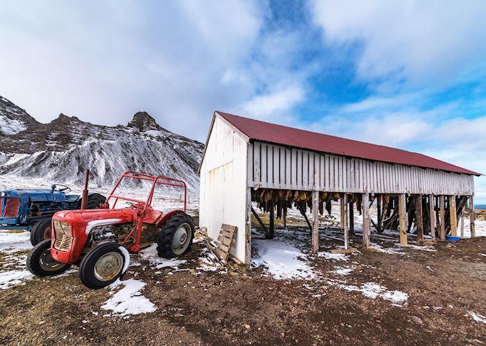 Curing hákarl, Snæfellsnes Peninsula