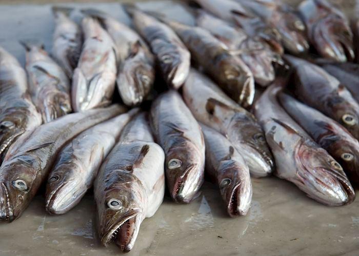 Freshly caught fish, Ischia