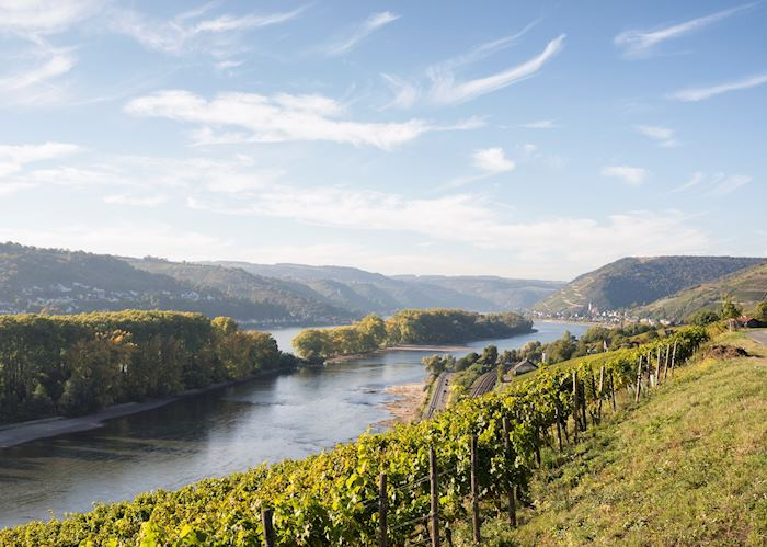Vineyards over the Rhine River